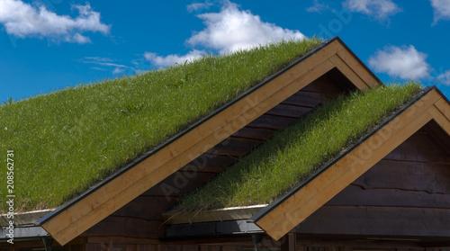 Fototapeta Toit à couverture végétale à Lillehammer, Norvège obraz