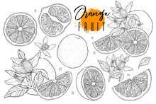Ink Hand Drawn Set Of Orange F...