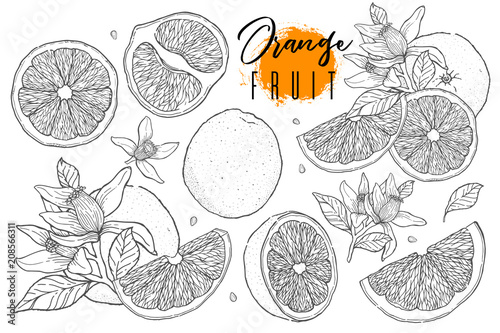 Fotografía  Ink hand drawn set of orange fruit