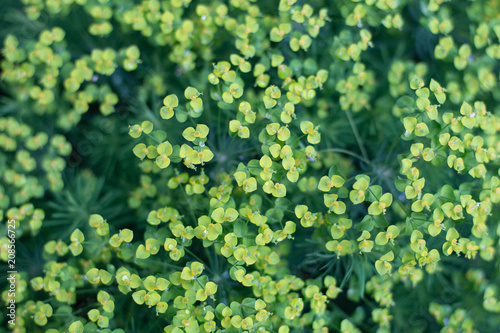 male-kwiaty