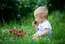 Cute Toddler Child, Boy, Eating Strawberries In A Garden