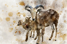 Mother Barbary Sheep With With Babies, Digital Watercolor Painting.