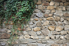 Stone Wall Twined With Ivy