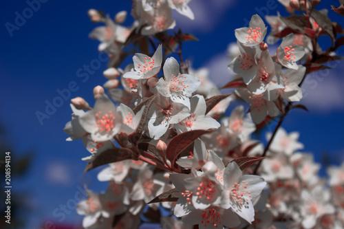 Fotobehang Bloemen Beautiful flowers as background