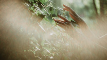 Discover The Secret Garden. Close Up Image Of Female Hands Touching The Green Leaves  Of Ivy In The Forest.