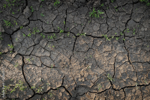 Láminas  Dry cracked soil texture and background