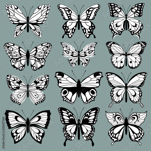 Fototapeta  set decorative butterflies