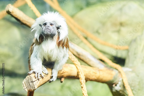 Foto op Plexiglas Aap Live nature. A monkey