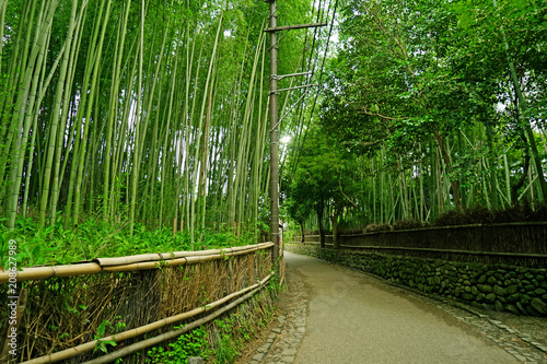 Poster Bamboe The green bamboo plant forest and footpath in Japan zen garden