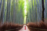 Fototapeta Bamboo - Woman walking in Bamboo forest, Arashiyama, Japan
