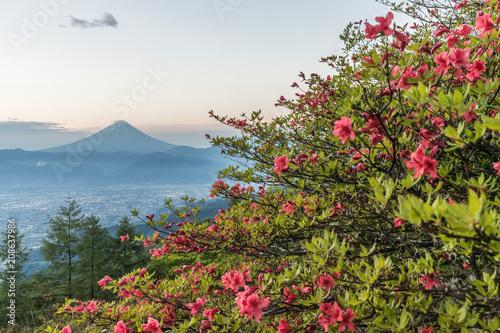 Papiers peints Azalea Japanese Azalea flower and Mountain Fuji in spring season. Azalea or Tsutsuji - Spring Flowers in Japan