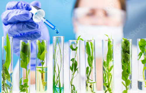 Poster Vegetal Scientist hold pipette with blue liquid water drop in test tubes with green fresh plant.