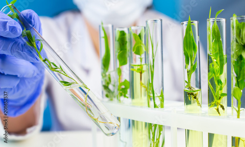 Poster Vegetal Scientist hold test tube with plant inside in laboratory.