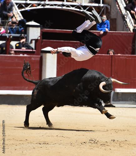 Foto op Aluminium Stierenvechten toro negro español