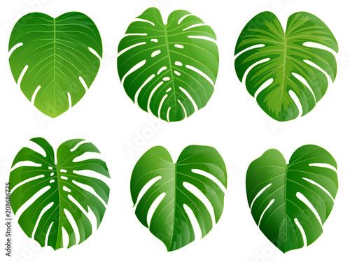 Obraz Summer, spring leaves set. Green flat icon. vector, Isolated on white - fototapety do salonu
