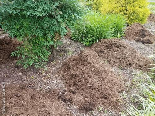 Fotografia, Obraz  pile of brown mulch and green plants