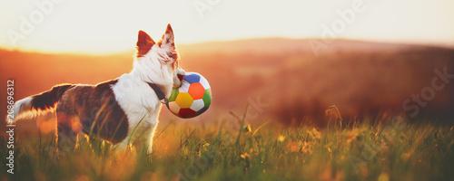 Süßer Hund Mischling mit Ball im Mund bei Sonnenaufgang, Panorama Wallpaper Mural