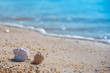 Beautiful sea shells on the beach, relaxing time concept.