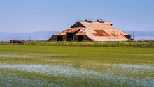 A Large Barn With A Rusting Metal Roof Is In An Open Field Next To A Rice Field With Newly Growing Rice. The Water Is Visible In The Rice Field. There Are Open Doors In The Barn. A Blue Sky Is Seen.
