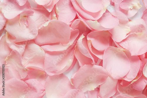 Fototapeta Rose petals background obraz na płótnie