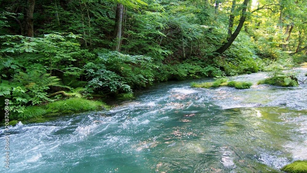 Fototapeta 新緑の奥入瀬渓流