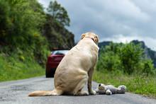 No Abandones A Tu Mascota. Perro Abandonado En La Carretera