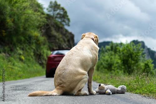 No abandones a tu mascota. Perro abandonado en la carretera Canvas Print