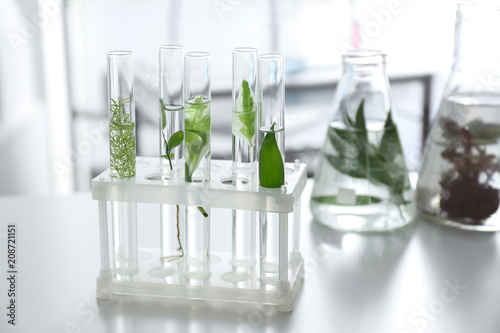 Stampa su Tela  Test tubes with plants in holder on table