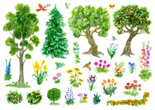 Design Set With Trees, Nature And Garden Items, Flowers Isolated On White. Vintage Country Background With Summer Landscape, Watercolor Illustration With Clip Arts