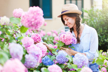 Gardening In Bushes Of Hydrangea. Girl With Smile Is Warking In Sunny Country Garden. Flowers Are Pink, Blue And Blooming In Town Street By House. Woman With Bouquet Is Gardener And Florist.