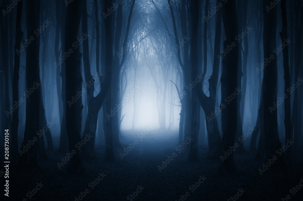 Fototapety, obrazy: magical forest path, surreal landscape