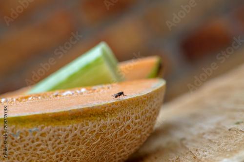 fliege hausfliege auf melone