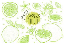 Hand Drawn Vector Lime Fruit S...