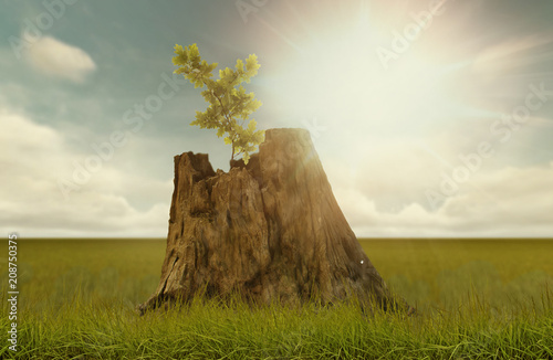 Photo  renewal, new seedling growing from old tree trunk