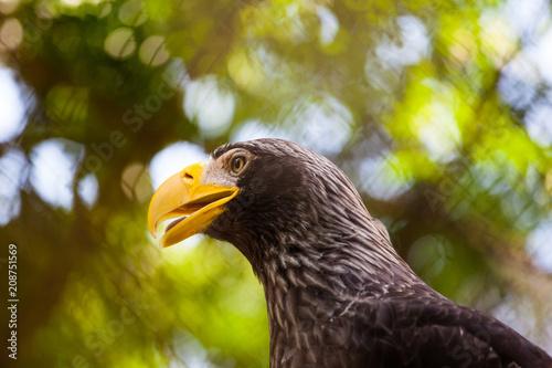 Foto op Aluminium Eagle head of a beautiful eagle with a yellow bright beak close-up