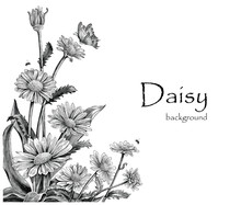 Daisy Flowers Hand Drawing Vin...