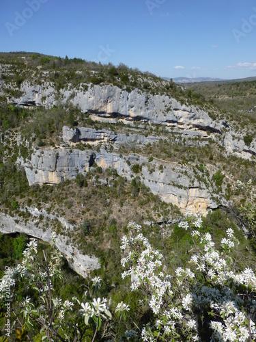 Fotografía View across the Gorges de la Nesque, Provence with a flowering amalanchier bush