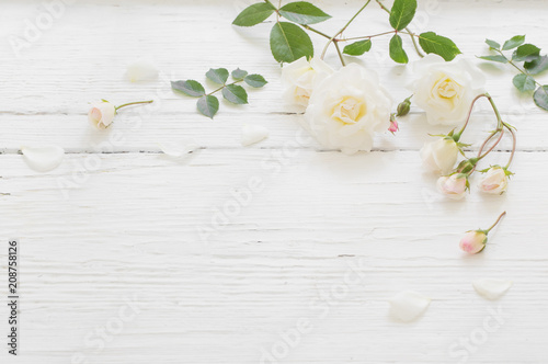 obraz lub plakat roses on white wooden background