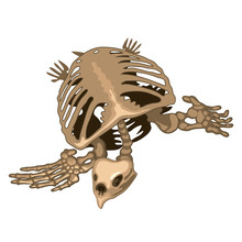 The Skeleton Of A Prehistoric ...