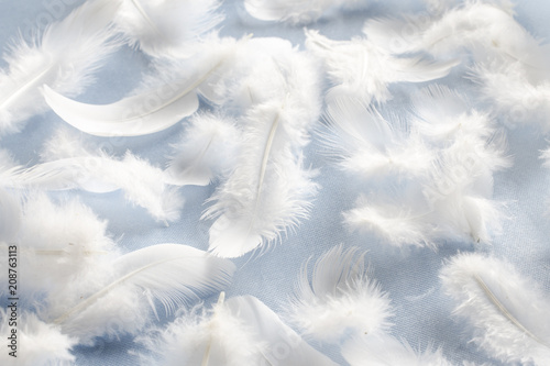 Fotomural  white fluffy feathers on fabric, pattern