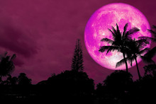 Full Pink Moon Over Silhouette Coconut Palm On Forest