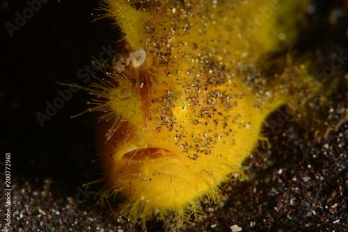 Foto op Plexiglas Landschappen Japanese underwater photos