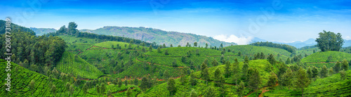 Panoramic beautiful tea plantations in hills near Munnar, Kerala, India Wallpaper Mural