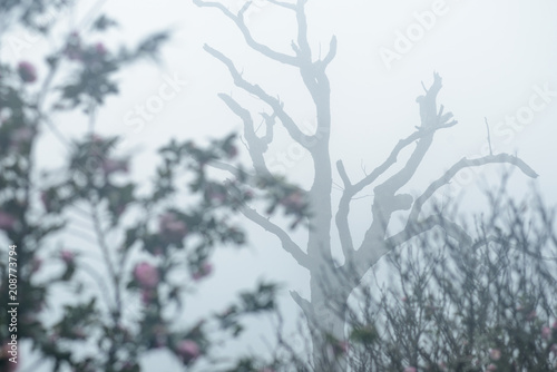 Staande foto Paardebloemen en water Flower of japanese camellia on the branch in foggy day