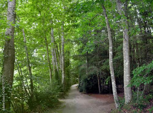 Tuinposter Weg in bos Le chemin du parc