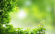 Green natural background,greenery background