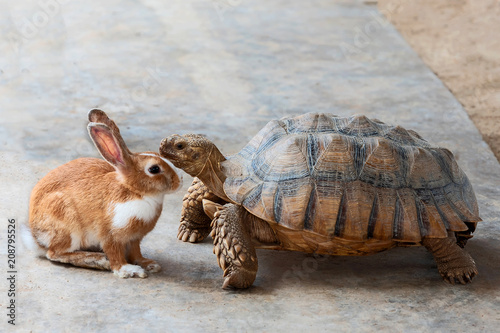 Tortue rabbit and turtle..