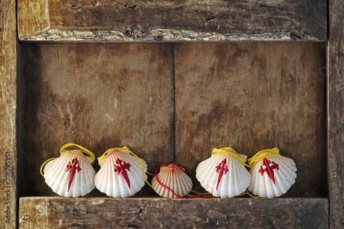 Canvas-taulu Compostela pilgrim scallops in wood background