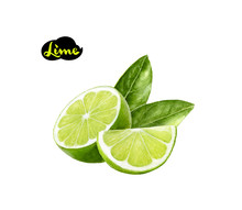 Lime Watercolor Illustration