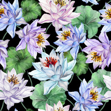 Beautiful Exotic Floral Background. Seamless Pattern. Large Light Lotus Flowers With Green Leaves On Black Background. Hand Drawn Illustration. Watercolor Painting.